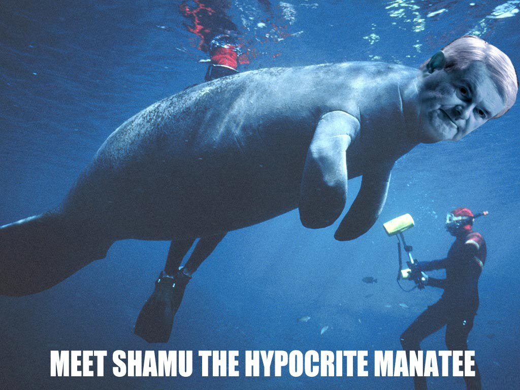 SHAMU GINGRICH THE MANATEE