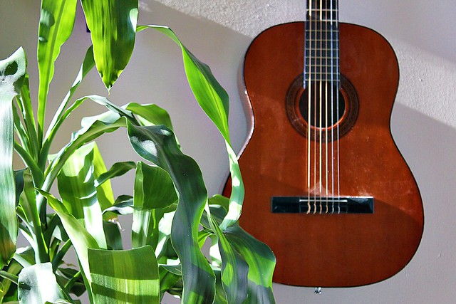 plant, guitar, wall