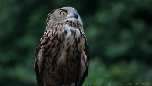 park bird owl jurong