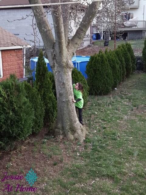Vada-trying-to-climb-the-tree