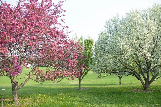 CrabApple Arboretum-15