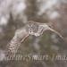 Great Gray Owl flight Tekiela IE6S0850