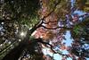 Photo:Autumn / 秋(あき) By TANAKA Juuyoh (田中十洋)