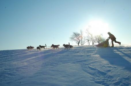 V norských stopách bílého tesáka