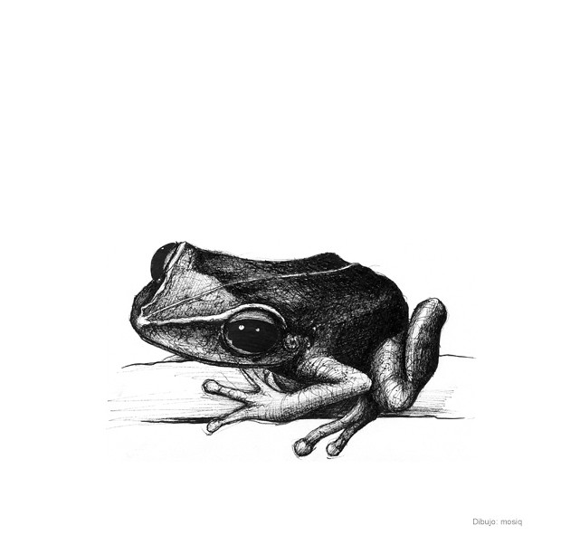 Free coqui frog coloring pages for Coqui coloring page