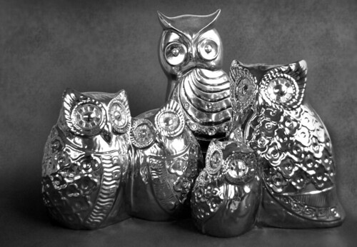 Owl Family Portrait by Sofia Katariina