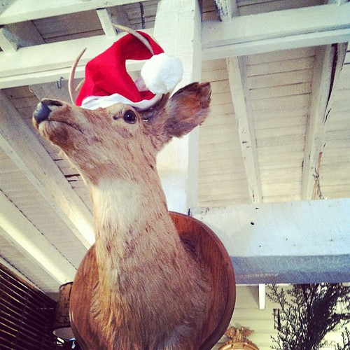 festive taxidermy