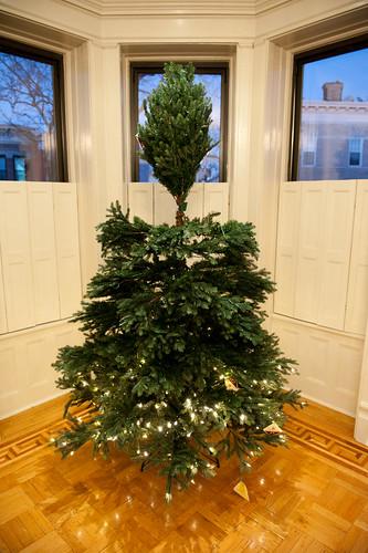 ChristmasTreeBalsamHill-9