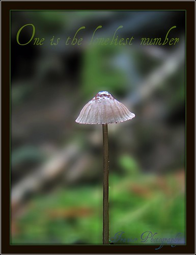 A Lone Mushroom @ Beauty Creek by Enjoy the journey...Not the Destination~