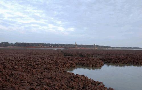紅藻門及綠藻門的珊瑚藻會累積成長。(圖片來源:特生中心網站)