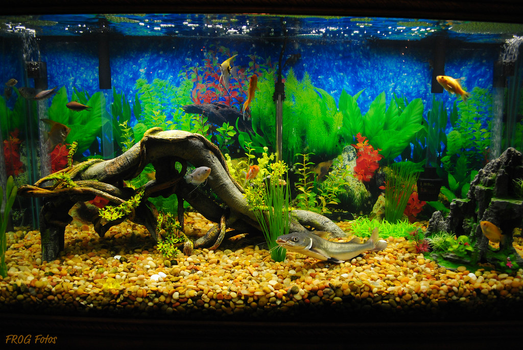 Happy fishies   Our beautiful 100 gallon fish tank  You can