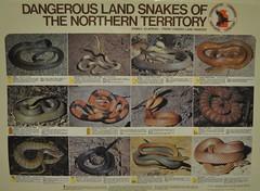 Les serps perilloses de la zona. Molt poca gent mort per picada de serp.