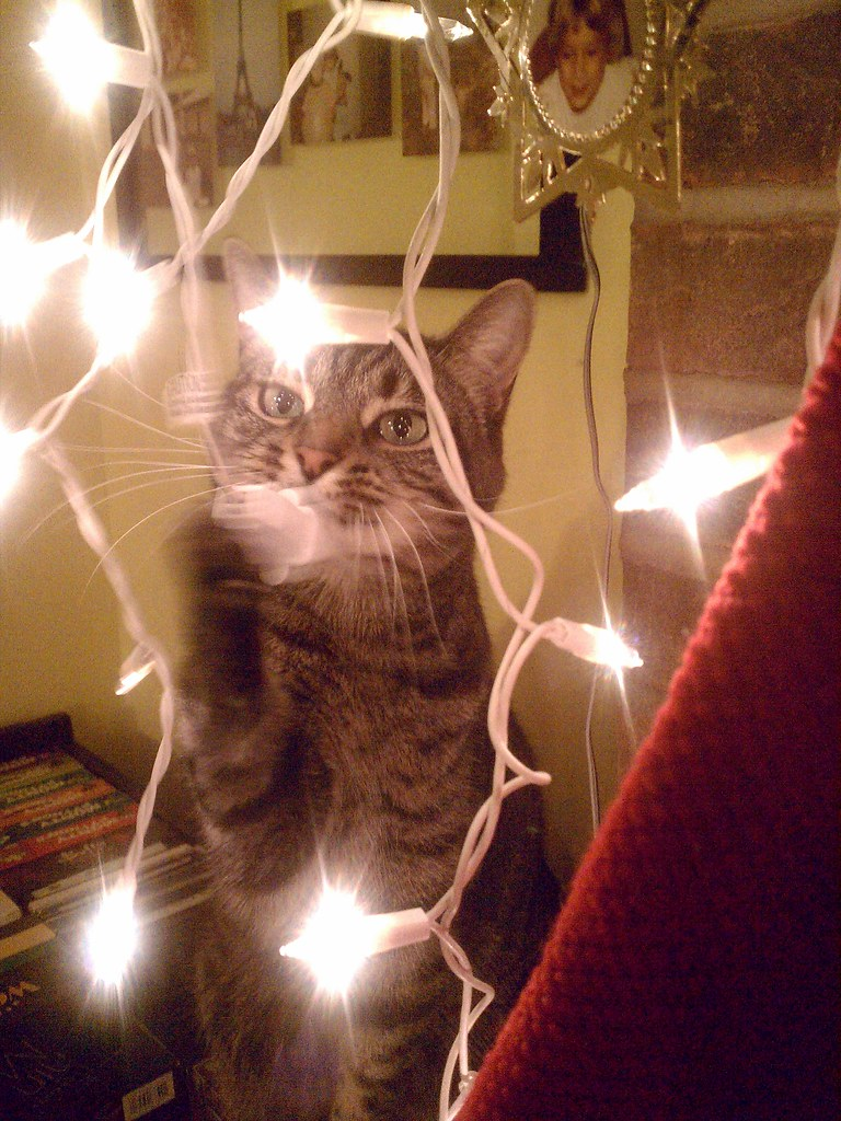 Percival playing with the holiday lights