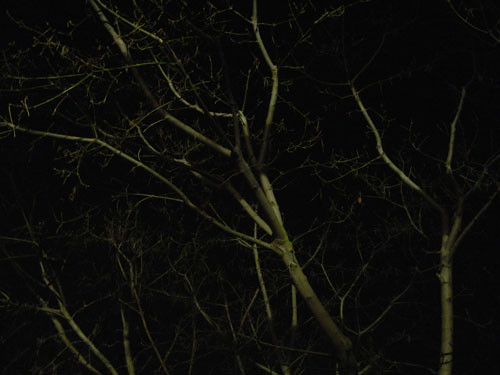 Trees at Night _ 9263
