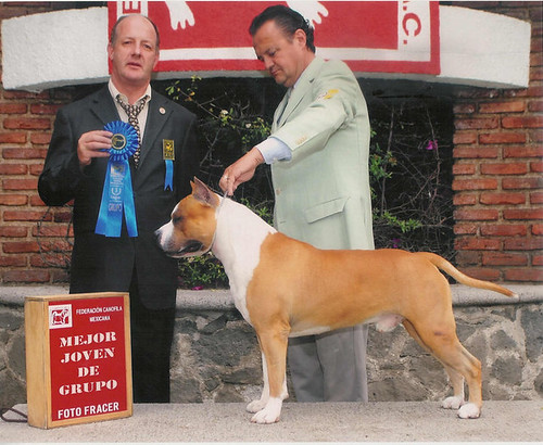 "AKC./UKC MULTI CHAMPION  Buenos Aires Snt's Emporio Armani ""CODE"" 
