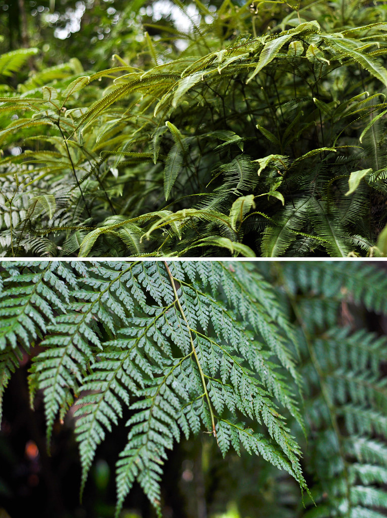 Rainforest-ferns