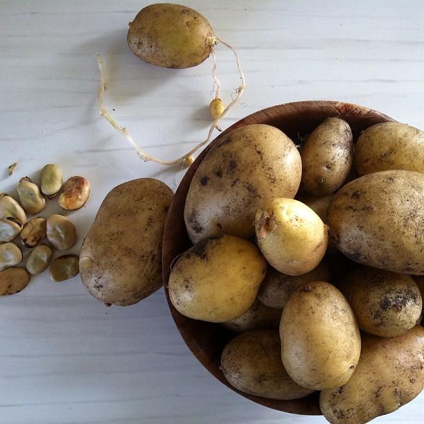 Harvest #nofilter