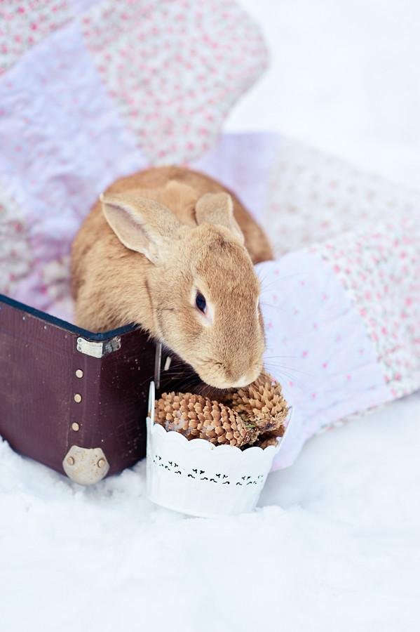 Rabbit ^^