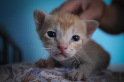 portrait cat portraits kitten vignetting canon600d