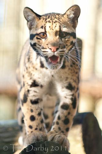 2011-12-26 - Zoo-891
