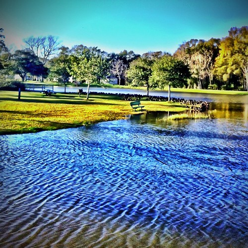 apple square mac texas squareformat sherry normal 2012 4g iphone inthepark westcolumbia firstcapitolpark whistlerducks iphoneography instagramapp uploaded:by=instagram goodthursday~~~ foursquare:venue=4d86c54de83fa143a24397a1 thelakeisfullagainaftertherains