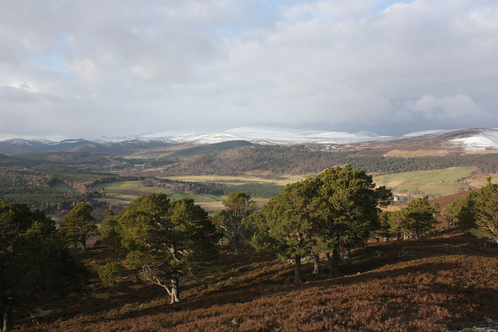 Cairngorms above the pines