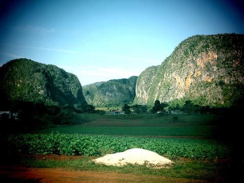 Cuba ~ tobacco farm