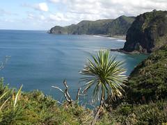 New Zealand Tour Piha