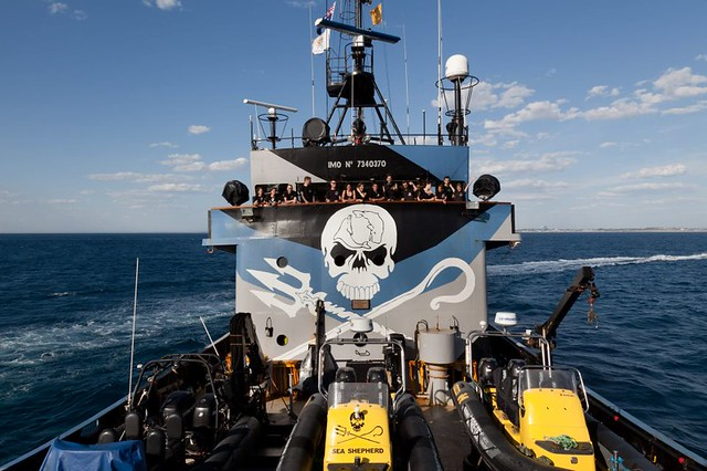 Every green head will enjoy a gift in support of Sea Shepherd
