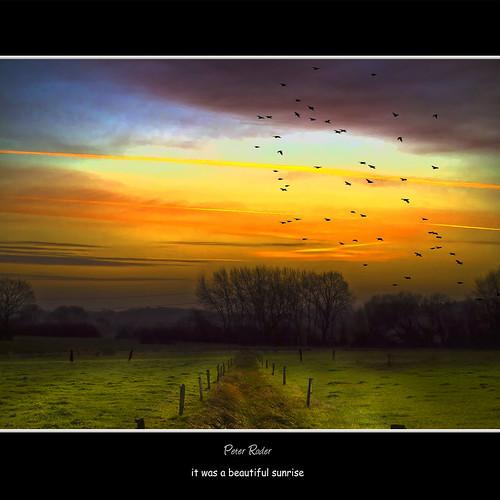 trees sun lake nature water grass leaves birds clouds sunrise way sonnenuntergang sundown crane gras blätter sonnenaufgang friesland weg greyheron fischreiher kranich galleryoffantasticshots