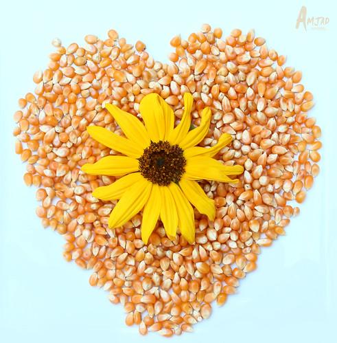 الورد by Amjad Almoqbel |♥| أمجَاد المُقبل