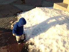 雪を見ています(2012/1/25)
