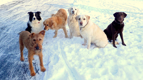 All 6 doggies.