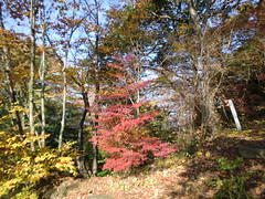 高尾山20111124-047