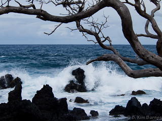 Hana Road waves