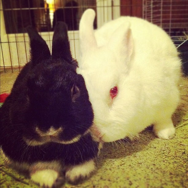 Bunny buddies. I love you.