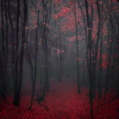 automne 11