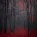 noir et rouge by cébé céline