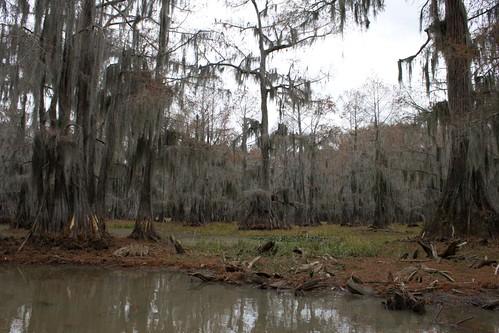 Tour Swamp6