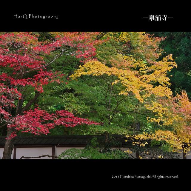 京都/泉涌寺(Sennyu-ji)
