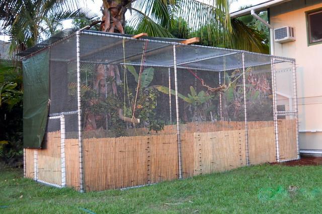 Flight Cage for Rehabilitating Wild Birds