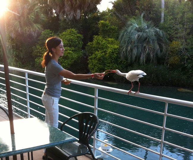 seleta+bird