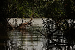 Guyana-8893