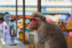 Hanuman visita el templo / Hanuman visits the temple