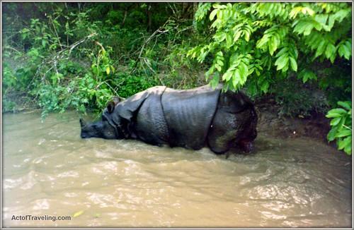 Rhino encounter in Nepal