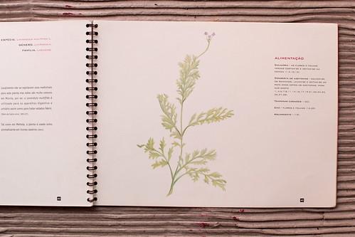 Plantas do Concelho