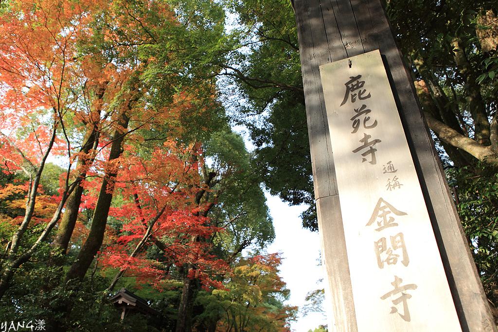 秋の金閣寺