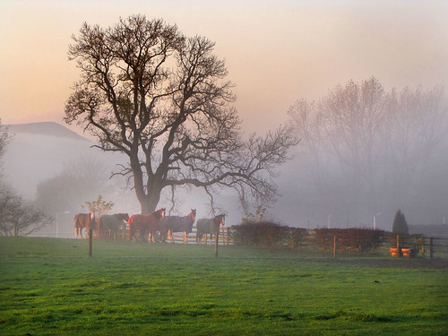 horses mist sunrise canon greatayton pd1001 greatbroughton sx10is pauldowning