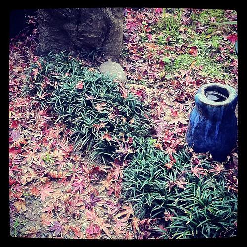 また大量に葉っぱが落ちやがったから今から掃除する