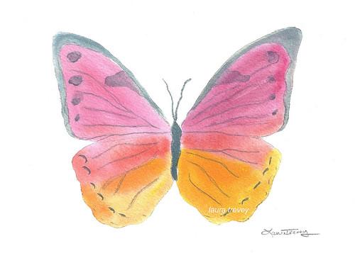 tangerine butterfly